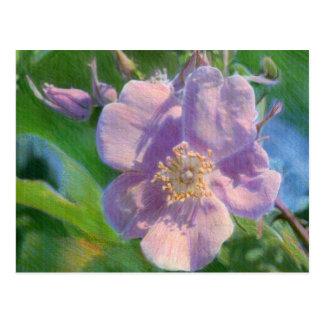 Wild Rose Mixed Media Drawing Postcard