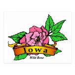 Wild Rose Postcard