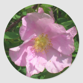 Wild Rose stickers