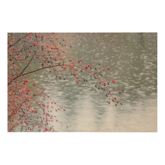 Wild Rose Tree Hanging a Pond | Seabeck, WA Wood Wall Art