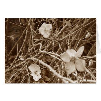 Wild Roses card no border
