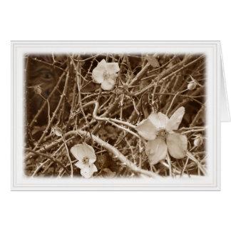 Wild Roses card white border