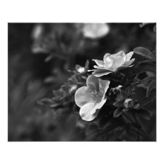 Wild Roses - Floral Fine Art Photo