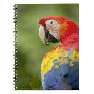 Wild scarlet macaw, rainforest, Costa Rica Notebook