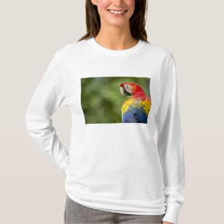 Wild scarlet macaw, rainforest, Costa Rica T-Shirt