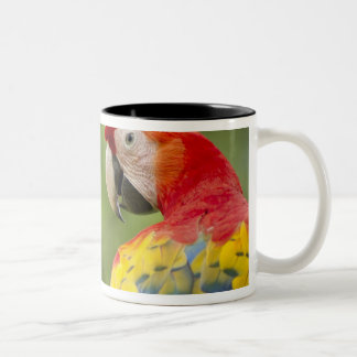 Wild scarlet macaw, rainforest, Costa Rica Two-Tone Coffee Mug