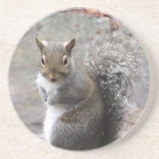 Wild Squirrel Round Stone Coaster
