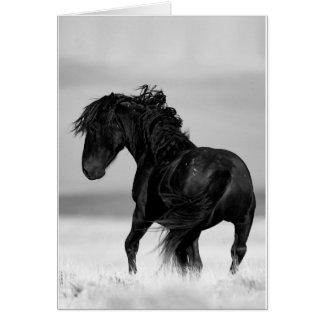Wild Stallion Turns - Wild Horse Greeting Card