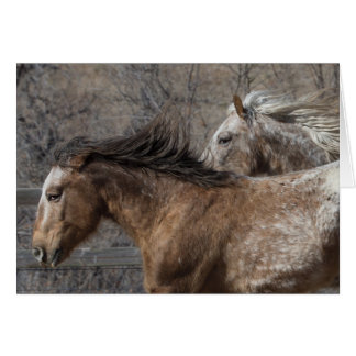 Wild Stallions: Galloping to Freedom Greeting Card