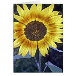 Wild Sunflower Card
