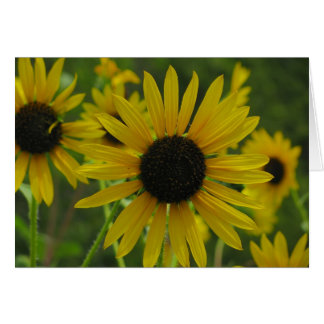 Wild Sunflowers Note card/Greeting card 1