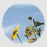 Wild Sunflowers Stickers