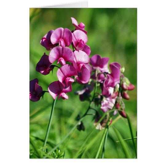 Wild Sweet-pea Flower Card