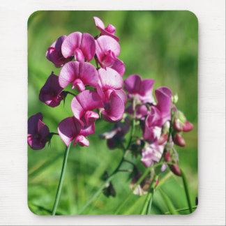 Wild Sweet-pea Flower Mouse Mat