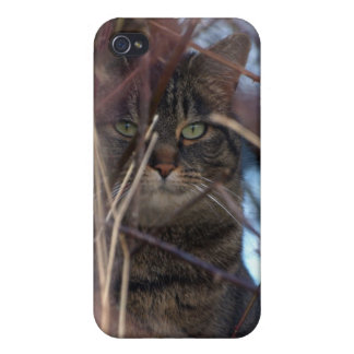Wild Tabby Cat Animal iPhone Case Case For The iPhone 4