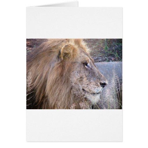 WILD THING - LION GREETING CARD