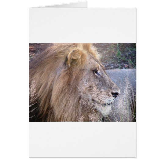 WILD THING - LION CARD
