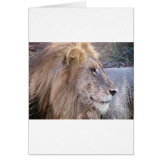 WILD THING - LION GREETING CARD
