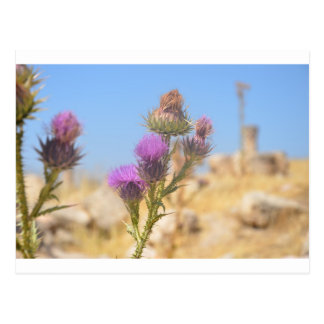 Wild Thistle Postcard