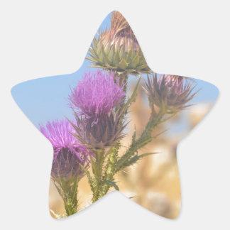 Wild Thistle Star Sticker