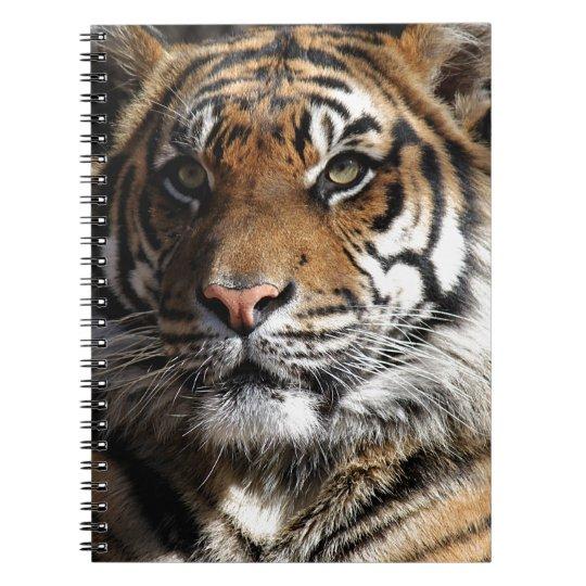 Wild Tiger Notebooks