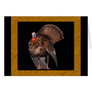 Wild Turkey (Alabama, Massachusetts, Oklahoma) Card