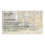 Wild turkey Double-Sided standard business cards (Pack of 100)