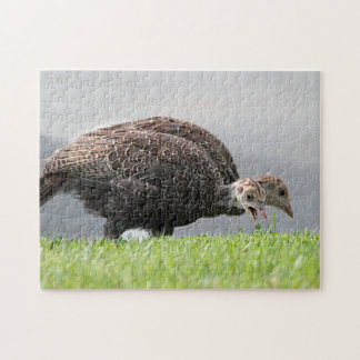 Wild turkey chicks jigsaw puzzle
