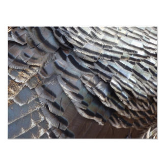 Wild Turkey Feathers II Abstract Nature Design Photograph
