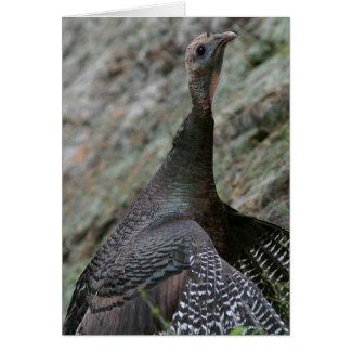 Wild Turkey, Greeting Card. Card