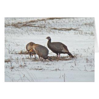 Wild Turkey in Snowy Field Card