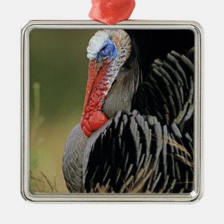 Wild Turkey, Meleagris gallopavo,male Silver-Colored Square Decoration