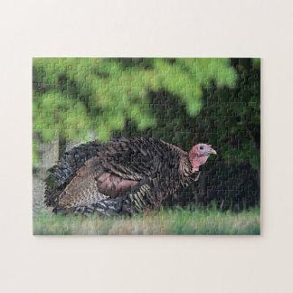 Wild turkey portrait puzzle