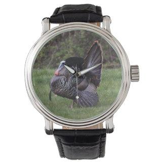 Wild Turkey Watch