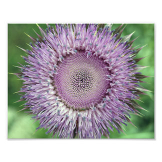 Wild Weed Bloom Photo Art