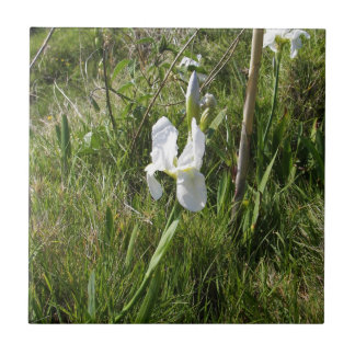 Wild White Canna Lily Small Square Tile