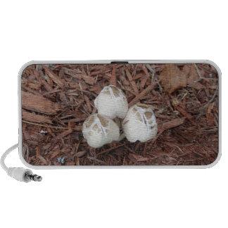 Wild White Mushroom Portable Speaker