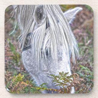 Wild White New Forest Pony Grazing on Bracken Beverage Coaster