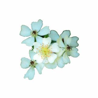 Wild White Roses pin Photo Sculpture