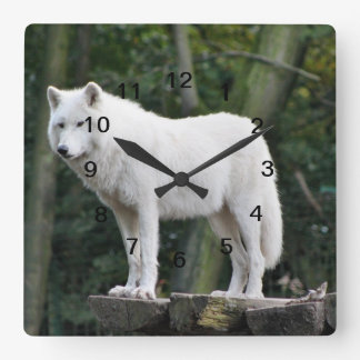 Wild White Wolf Square Wall Clock