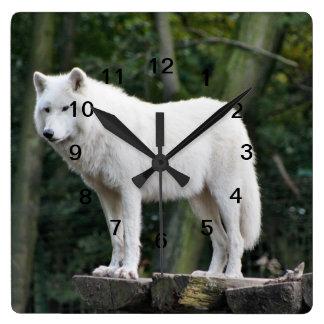 Wild White Wolf Wall Clocks