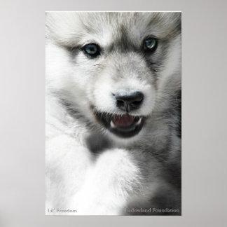 Wild Wolf Cub Poster