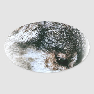 Wild Wolf Face Angry Eating Oval Sticker