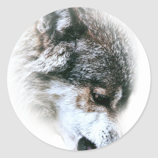 Wild Wolf Face Angry Eating Round Sticker