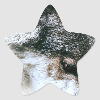 Wild Wolf Face Angry Eating Star Sticker