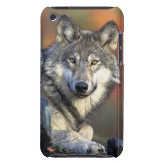 wild wolf iPod touch covers