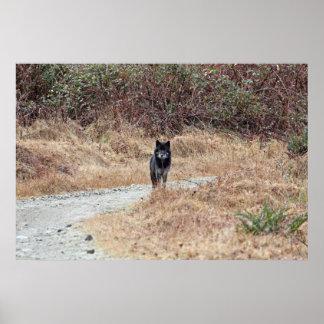Wild Wolf Photo Poster