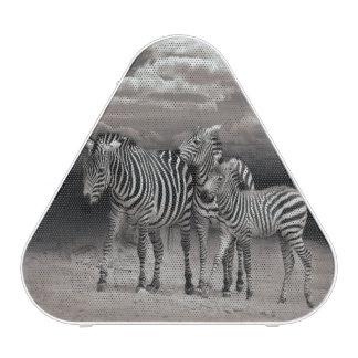 Wild Zebra Socialising in Africa