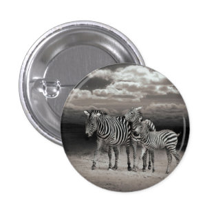 Wild Zebra Socialising in Africa 3 Cm Round Badge