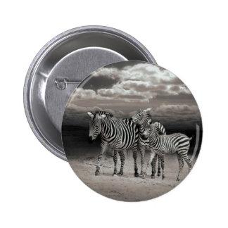Wild Zebra Socialising in Africa 6 Cm Round Badge